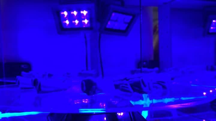Die Resin Miniaturen aus dem 3D-Drucker härten unter UV-Licht aus.